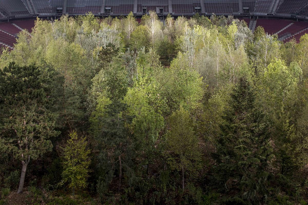 Enea Landscape Architecture For Forest Enea Landscape
